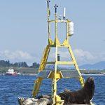 Ocean Data Buoy