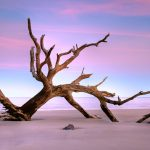 More Driftwood from Jekyll Island