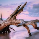 You Guessed It – More Driftwood