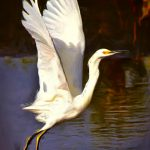 The Painted Snowy Egret