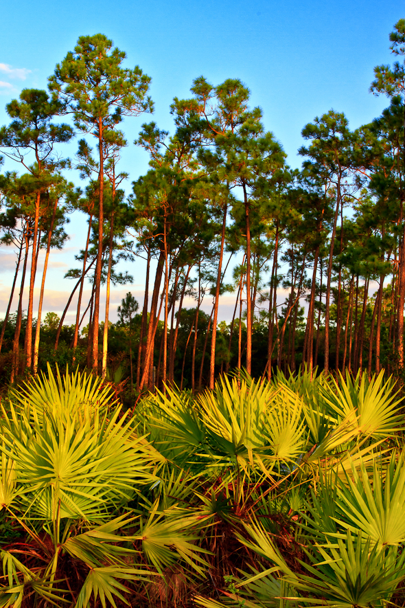Long Pine Key, Everglades National Park, Florida