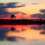 Pine Glades Sunset
