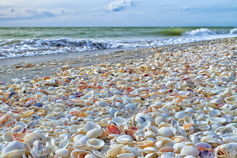 Best Place To Shell Sanibel Island
