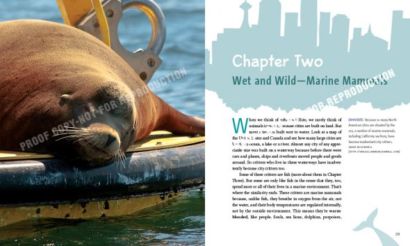 City Critters: Sea Lion