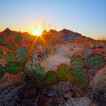 The Prickly Pear, Texas