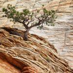 Checkerboard Mesa, Zion National Park