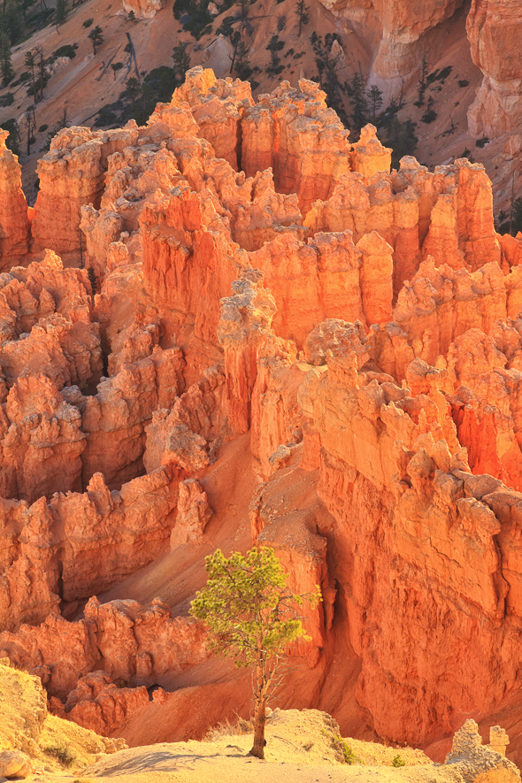 Fairyland, Bryce Canyon National Park, Utah
