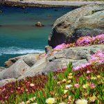 Back on the Pacific Coast: Crescent City California