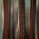 Cathedral Grove Abstract