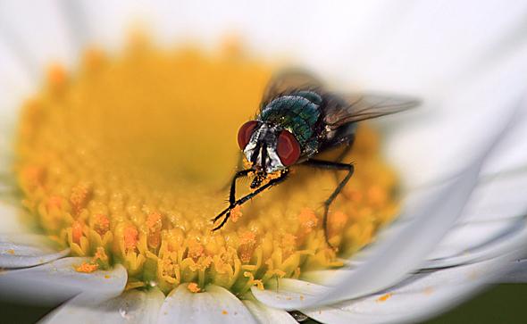 Fly and Daisy