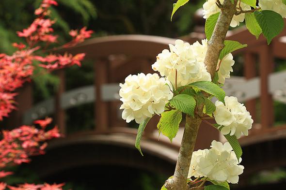 Hatley Castle Japanese Garden, Victoria, BC