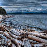 Rebecca Spit Driftwood