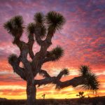 The Third Joshua Tree