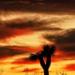 First Joshua Tree Sunset