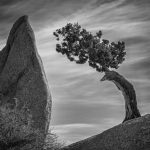 Juniper and Balanced Rock