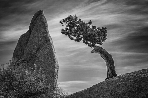 Juniper and Balanced Rock, Joshua Tree National Park, California.