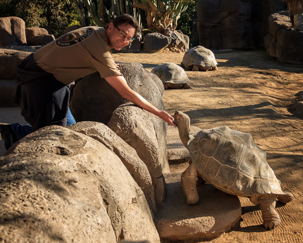 Ray pets the tortoise at the San Diego Zoo, California.