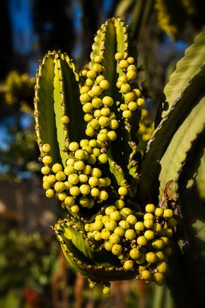Balboa Park Cactus Garden by Anne McKinnell