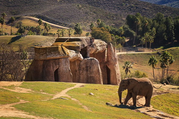 Elephant at the San Diego Safari Park
