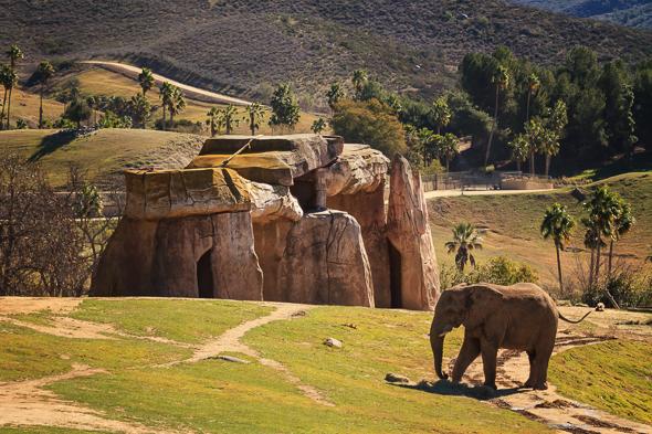 Elephant at the San Diego Safari Park