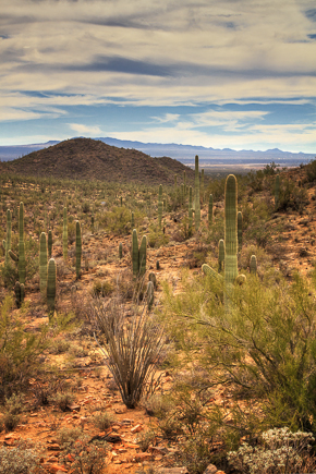 Saguaro National Park by Anne McKinnell