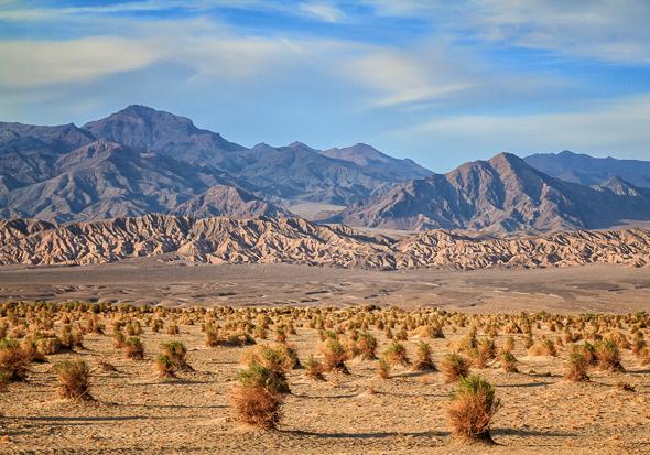 Devil's Cornfield, Death Valley National Park by Anne McKinnell