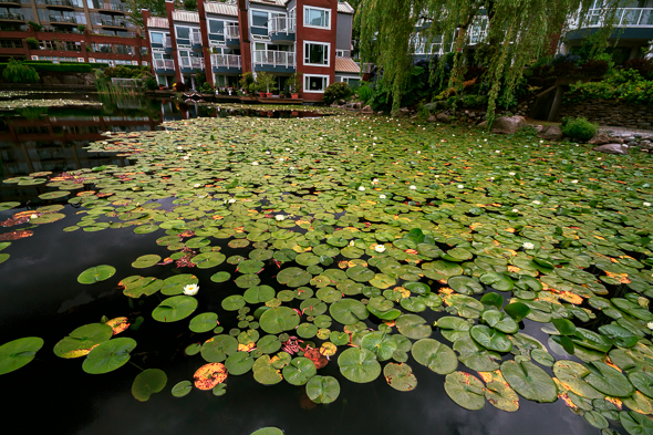 Lilies and Condos by Anne McKinnell
