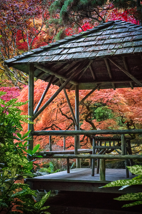 Japanese Garden at Butchart Gardens, Victoria, British Columbia