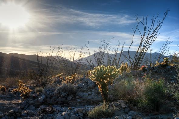 Desert nature trail in Anza Borrego State Park, California, by Anne McKinnell