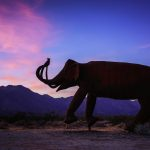 Surprise Elephant for a Surprise Sunset