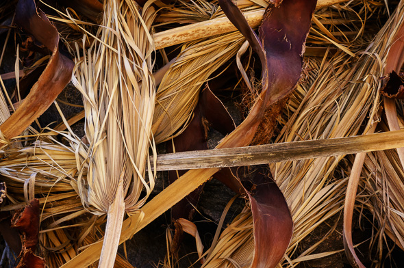 Dried palm leaves in Palm Springs, California, by Anne McKinnell