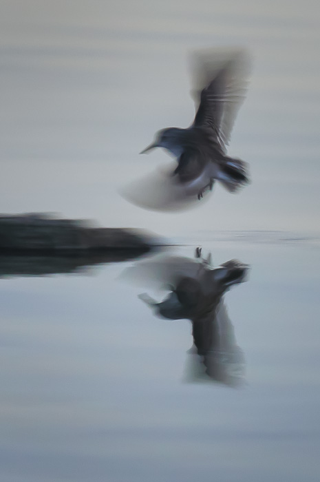 Bird in Flight Abstract by Anne McKinnell