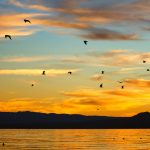Salton Sea Seagulls by Anne McKinnell