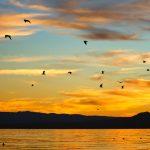 Salton Sea Seagulls