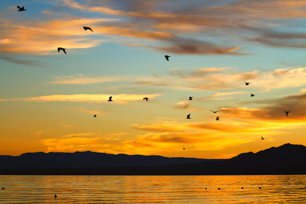 Salton Sea Seagulls by Anne McKinnell