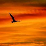 Flying in a Fiery Sky