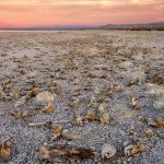 Salton Sea Tilapia by Anne McKinnell