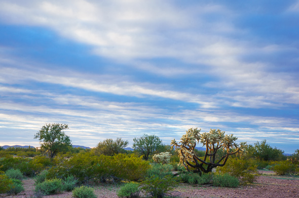 A typical desert scene in Organ Pipe National Monument by Anne McKinnell