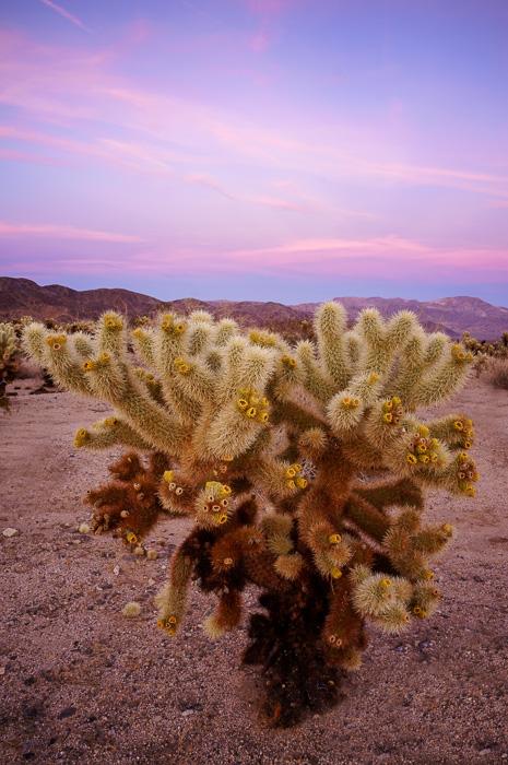 Cholla Cactus Garden by Anne McKinnell