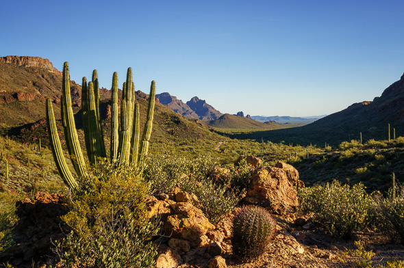 Organ Pipe Cactus National Monument, Arizona, by Anne McKinnell