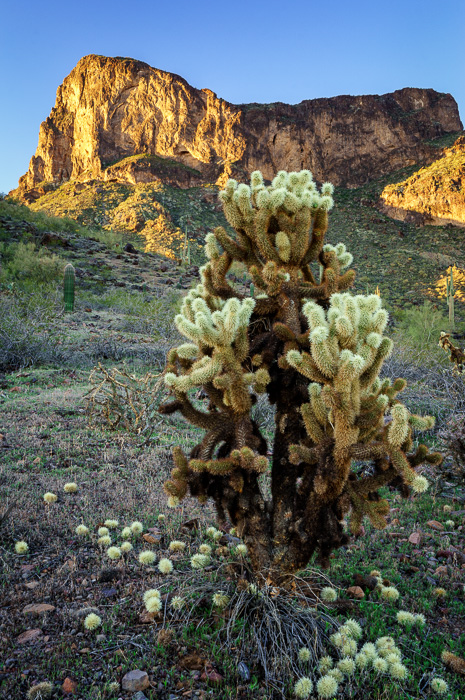 Picacho Peak State Park, Arizona by Anne McKinnell