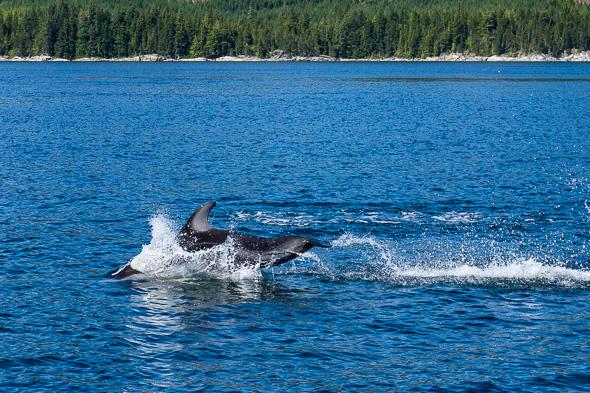 Dolphin #2 by Anne McKinnell