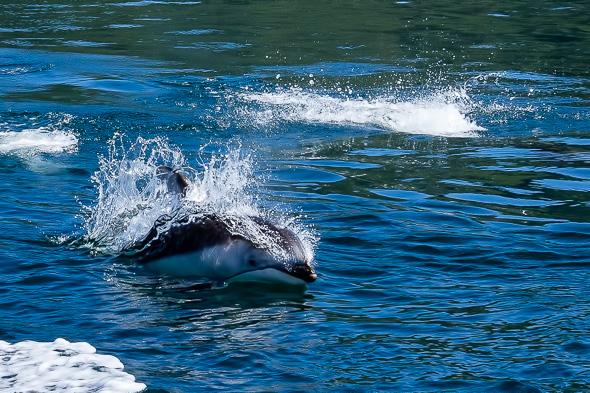 Dolphin #3 by Anne McKinnell