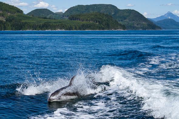 Dolphin #4 by Anne McKinnell