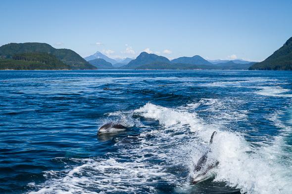 Dolphin #5 by Anne McKinnell