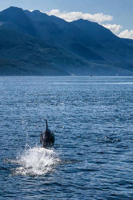 Dolphin #1 by Anne McKinnell