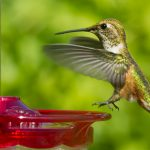 Hummingbird Landing by Anne McKinnell