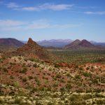 Saguaros as Far as the Eye Can See