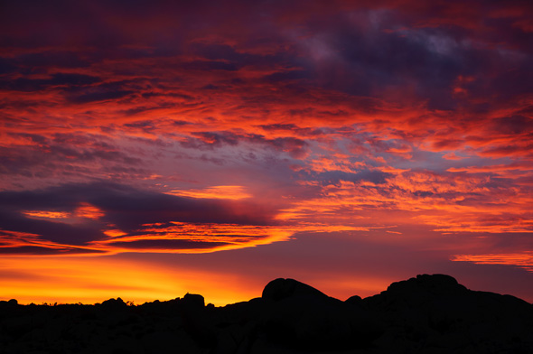 Sunset at Joshua Tree National Park by Anne McKinnell