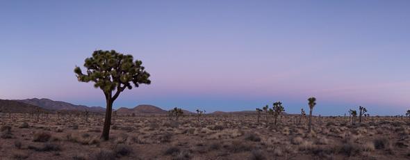 Joshua Tree Panorama by Anne McKinnell